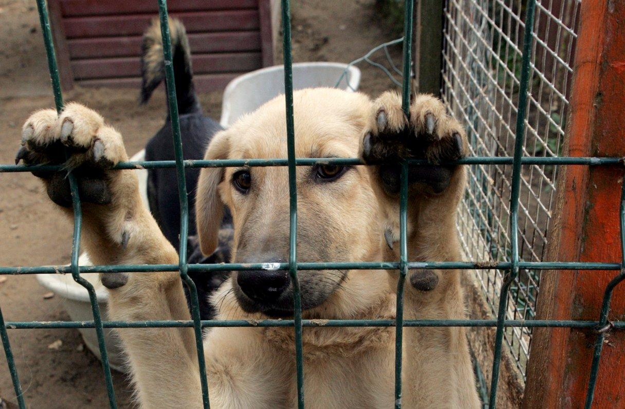 Eiroparlamentārieši rosina stingrākas prasības lolojumdzīvnieku pārrobežu tirdzniecībai