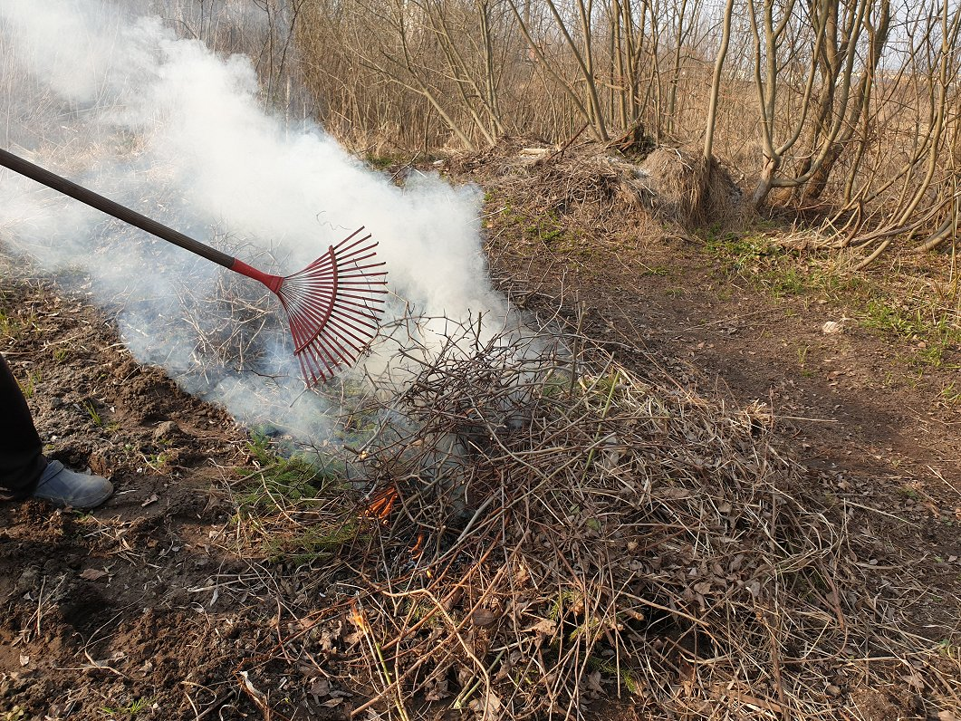 What can and cannot be burned in your backyard / Article