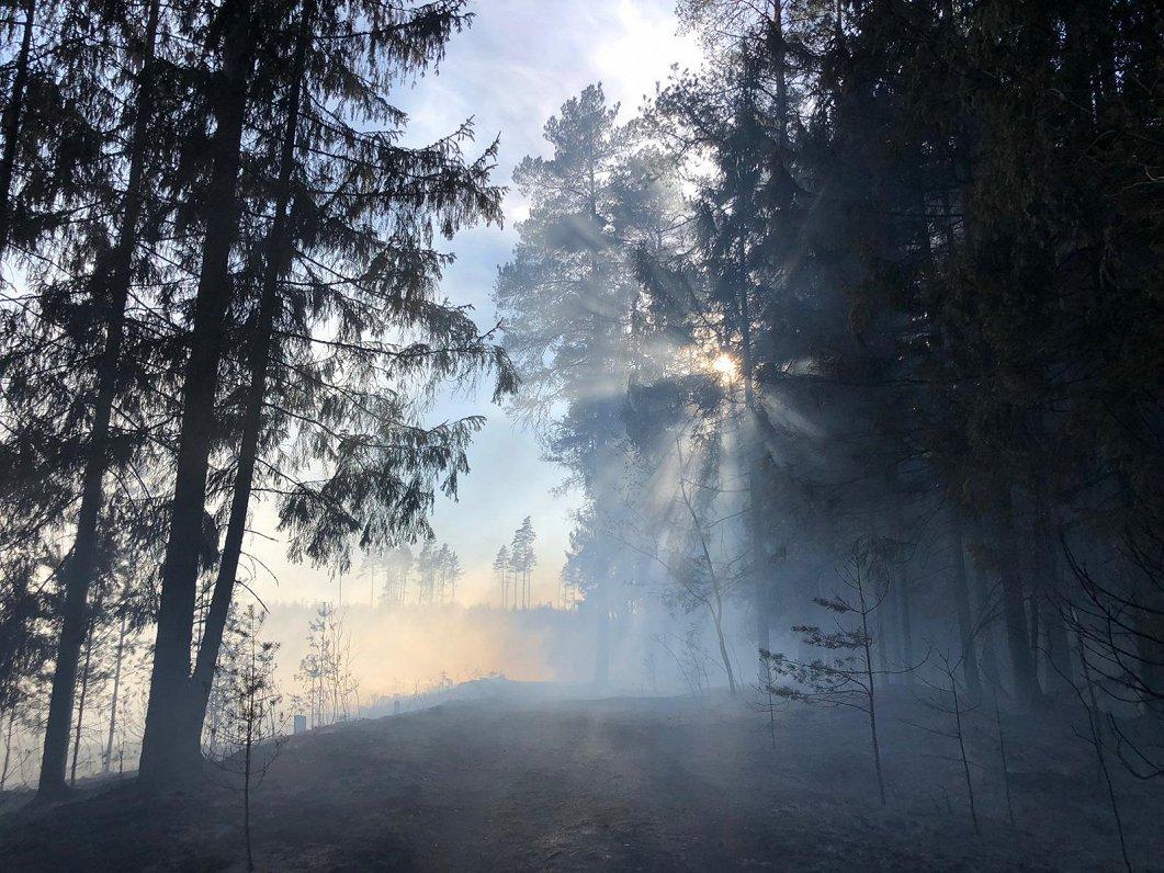 В Олайнском крае загорелся лес и торфяное болото