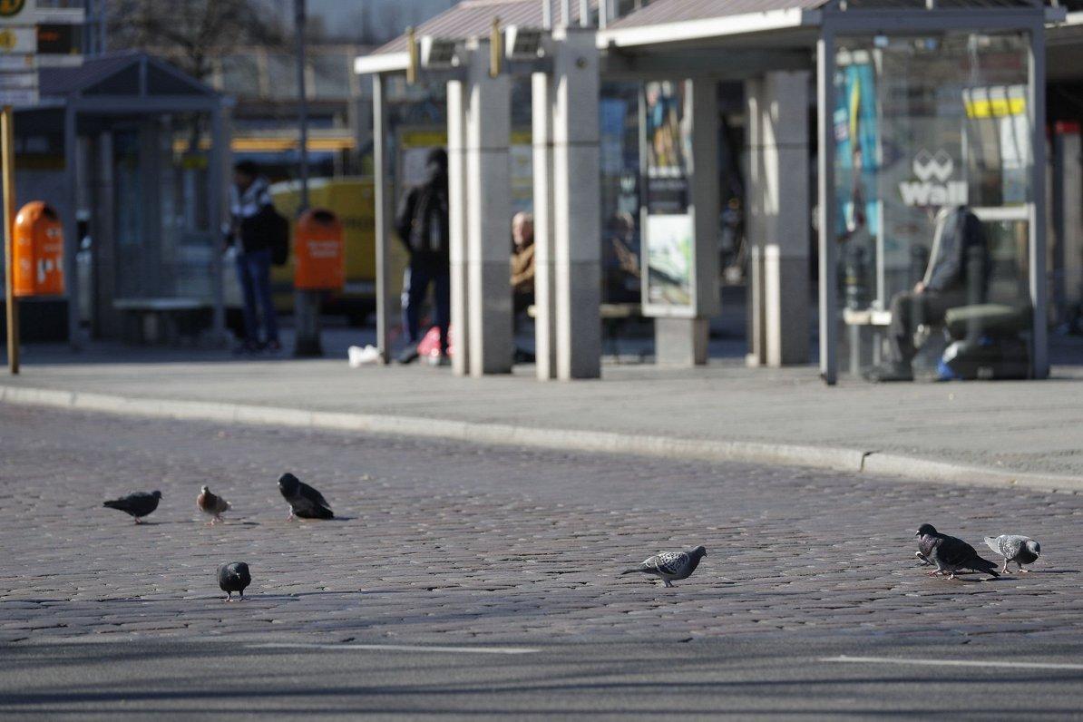 Tukšo pilsētu ielu dēļ Vācijā vien varētu mirt tūkstošiem baložu