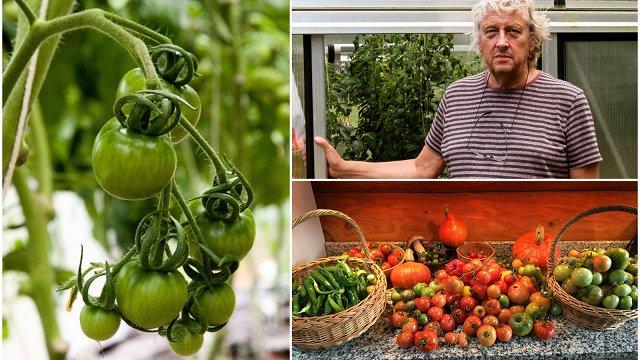 Komponista Zigmara Liepiņa mazdārziņš – gurķi, tomāti un citi labumi