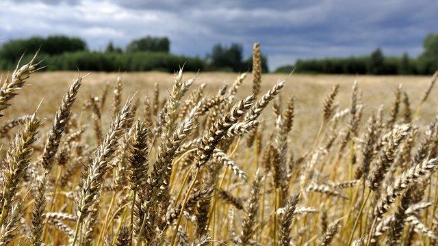 «Eurostat»: Kopš 2011. gada Latvijā pārdoto pesticīdu apjoms palielinājies par 49,1%