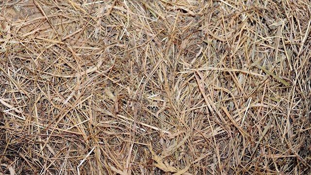 Virzas tēva māju apkārtnē notiks siena talka bioloģiski vērtīgas pļavas saglabāšanai