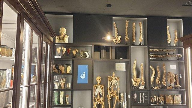 Jaunajā Anatomijas muzejā – viss pa īstam