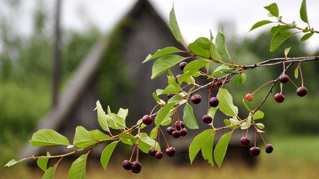 Pērn sarucis pesticīdu daudzums augļu kokiem un ogulājiem, pieaudzis – virknei lauka dārzeņu