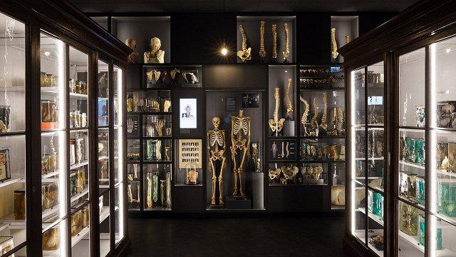 Pabeigta jaunā RSU Anatomijas muzeja izveide
