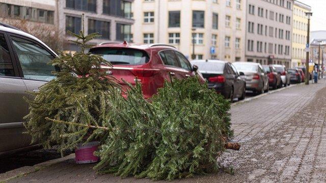 Arī Krievijā lietderīgi izmanto vecās Ziemassvētku egles
