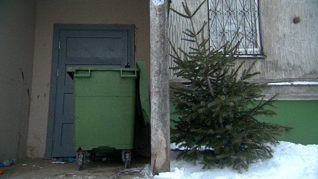 «Rīgas namu pārvaldnieks» pagalmā izliktas eglītes janvārī izved bez maksas