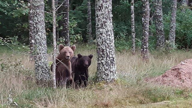 Abi pusaugu lāči no Vijciema devušies uz Smiltenes novadu